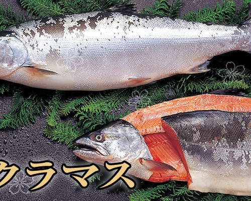 sakuramasu-1-750-400